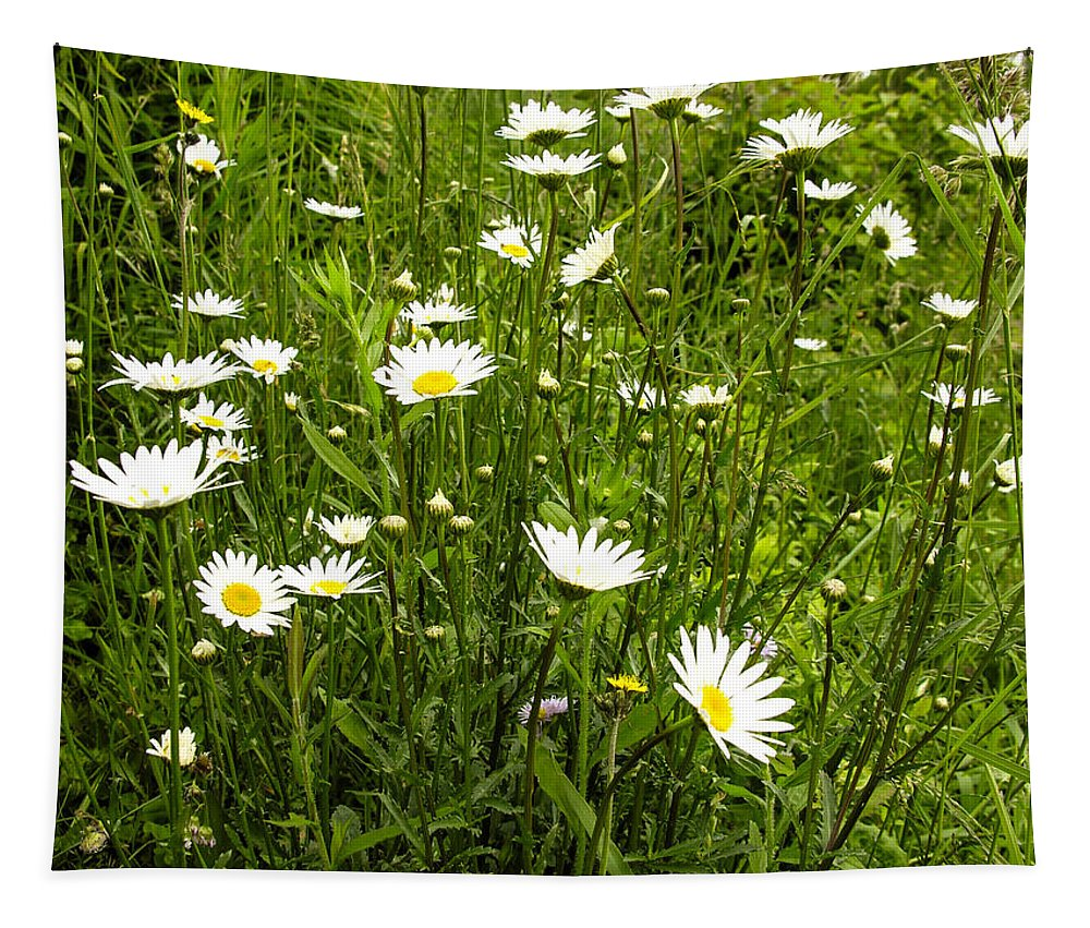 Daisy Tapestry featuring the photograph Coming Up Daisy's by Sherman Perry