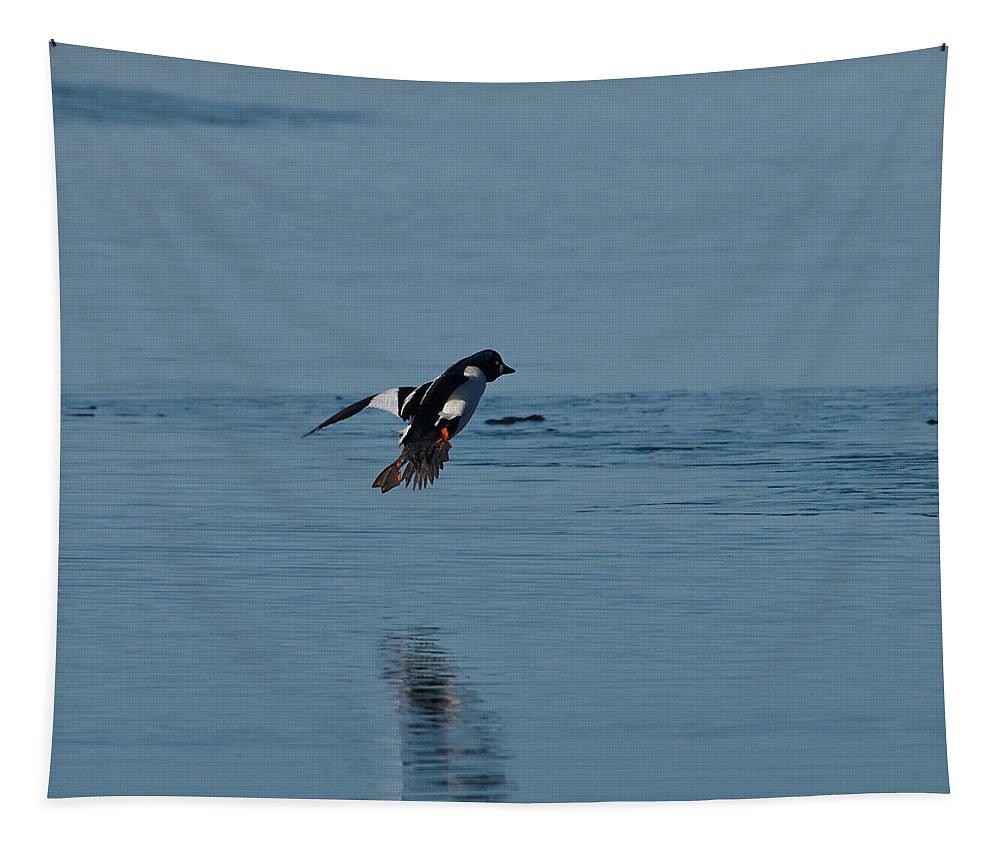 Lehto Tapestry featuring the photograph Common Goldeneye by Jouko Lehto