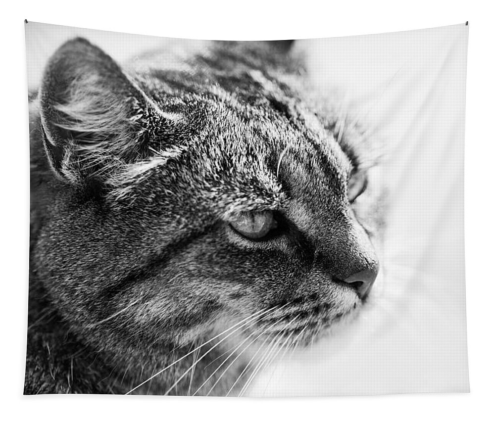 Cat Tapestry featuring the photograph Concentrating Cat by Hakon Soreide
