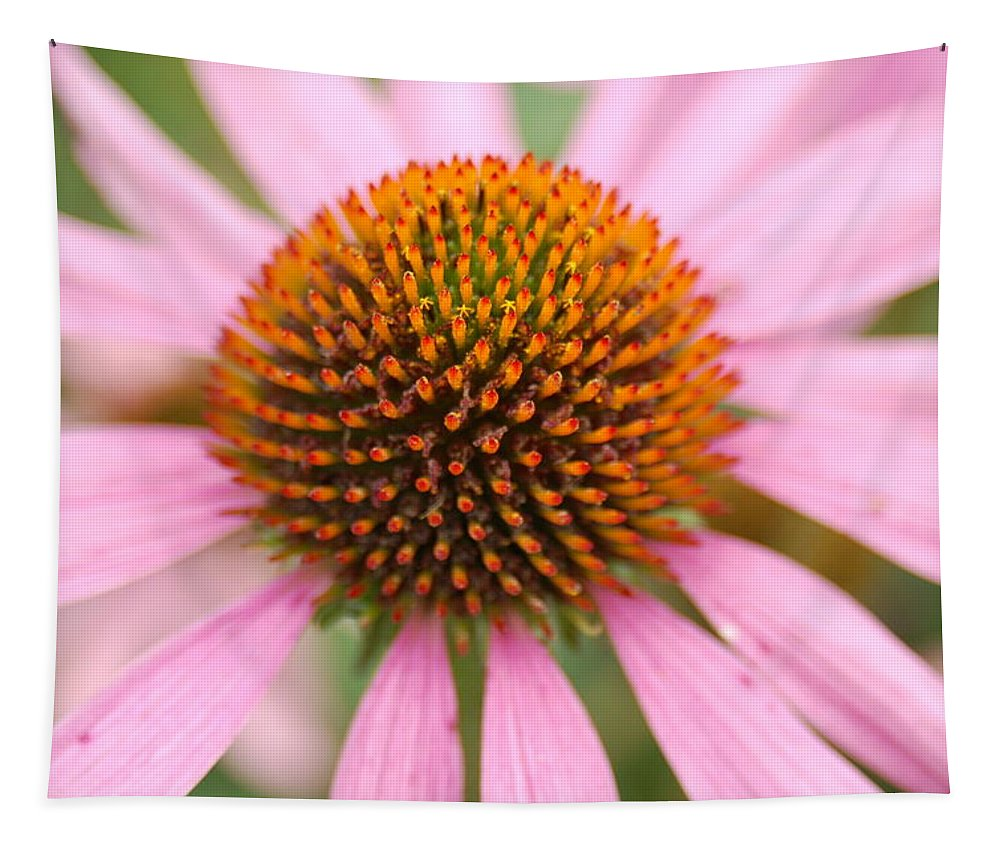 Coneflower Tapestry featuring the photograph Coneflower2 by Annette Persinger