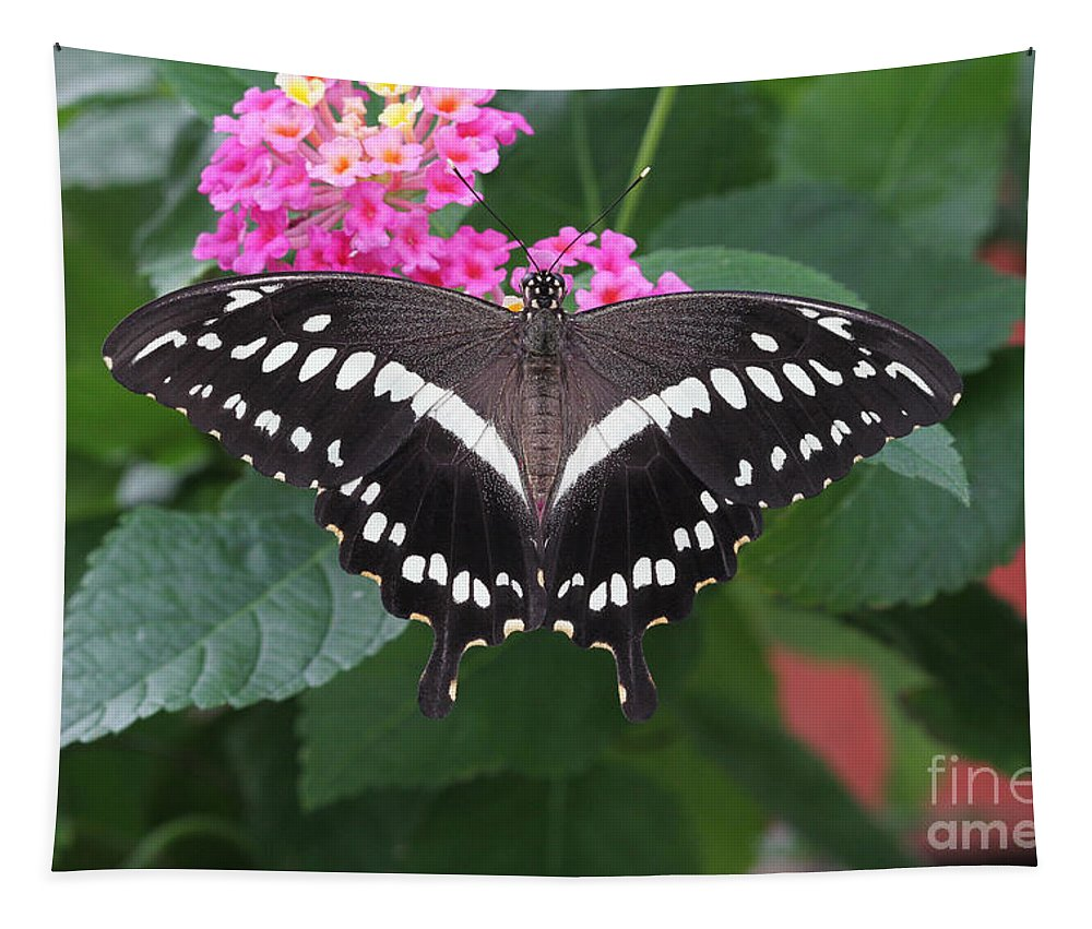 Butterfly Tapestry featuring the photograph Constantines Swallowtail by Judy Whitton