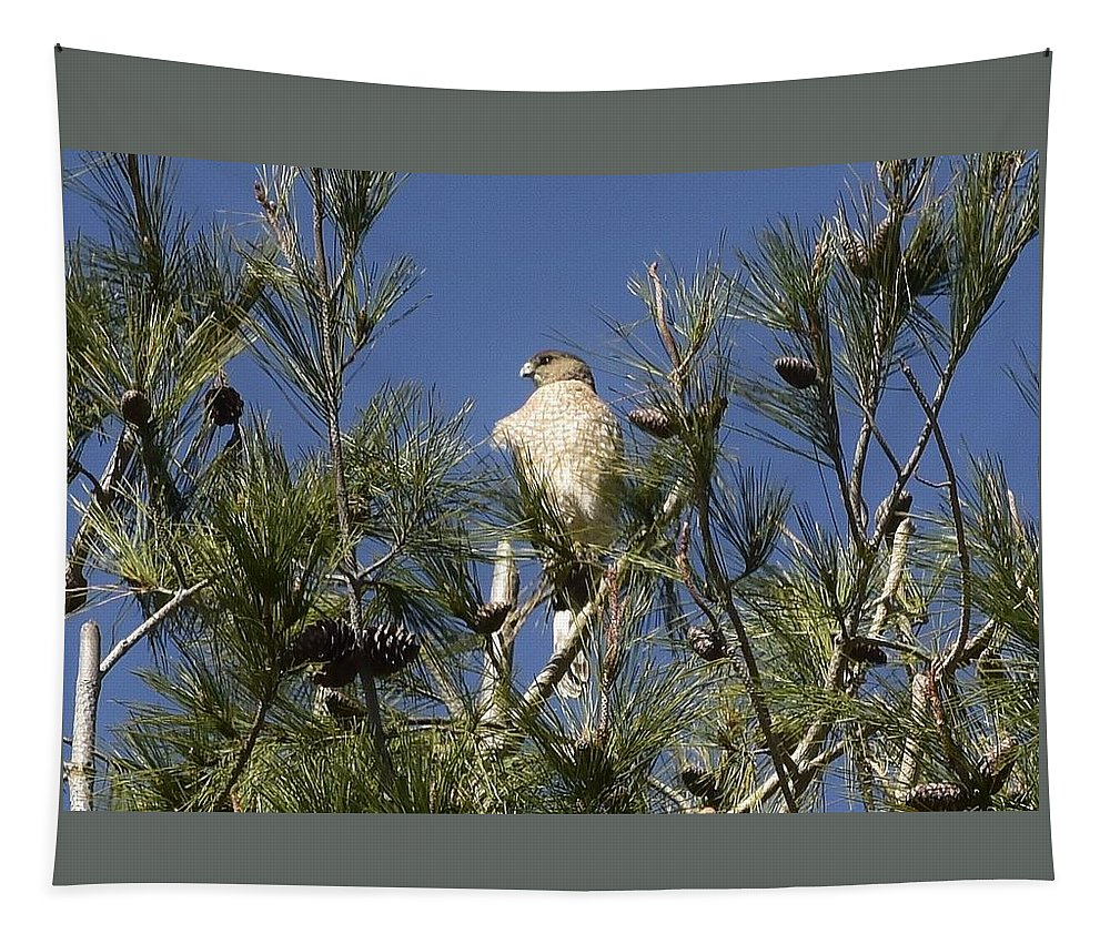 Linda Brody Tapestry featuring the photograph Coopers Hawk In Tree by Linda Brody