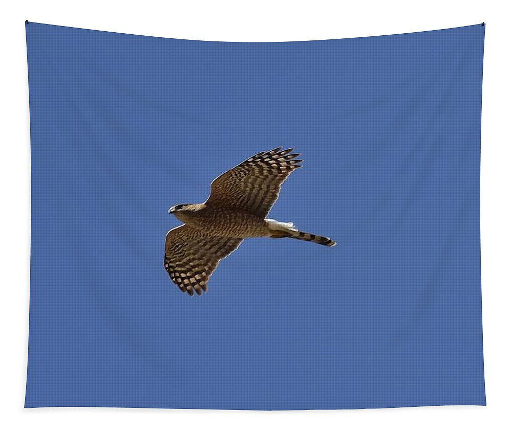 Linda Brody Tapestry featuring the photograph Coopers Hawk Inflight by Linda Brody