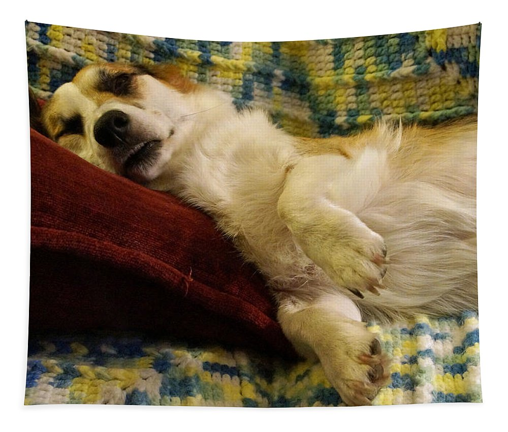 Corgi Tapestry featuring the photograph Corgi Asleep On The Pillow by Mick Anderson