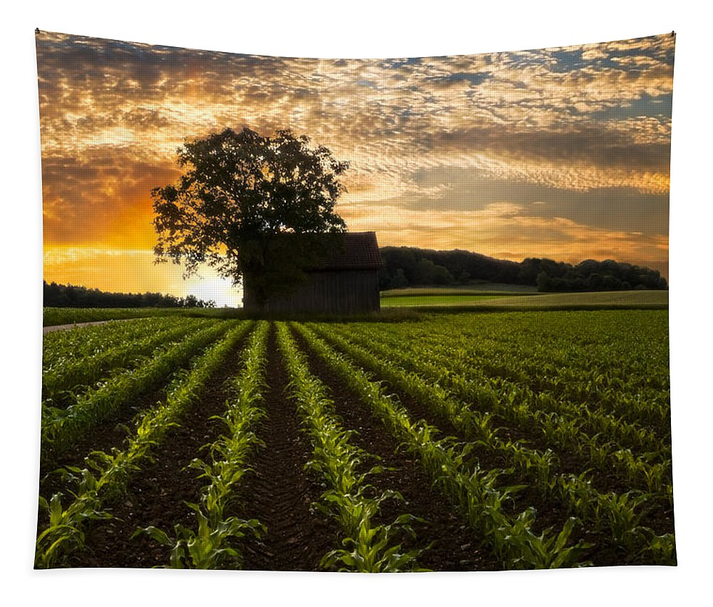 Appalachia Tapestry featuring the photograph Corn Rows by Debra and Dave Vanderlaan