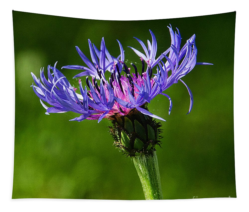 Cornflower Tapestry featuring the photograph Cornflower by Susie Peek