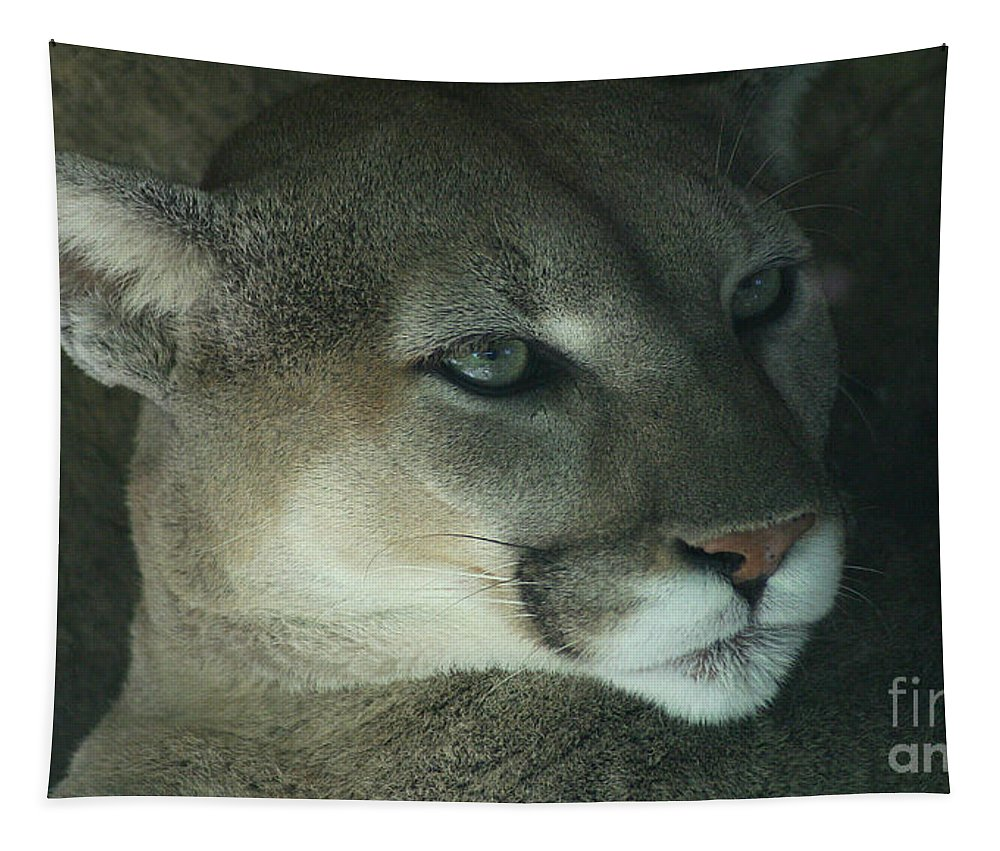 Cougar Tapestry featuring the photograph Cougar-7688 by Gary Gingrich Galleries