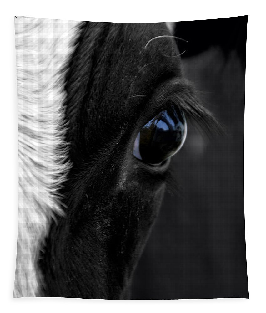 Animal Tapestry featuring the photograph Cow Hey You Looking At Me by Thomas Woolworth