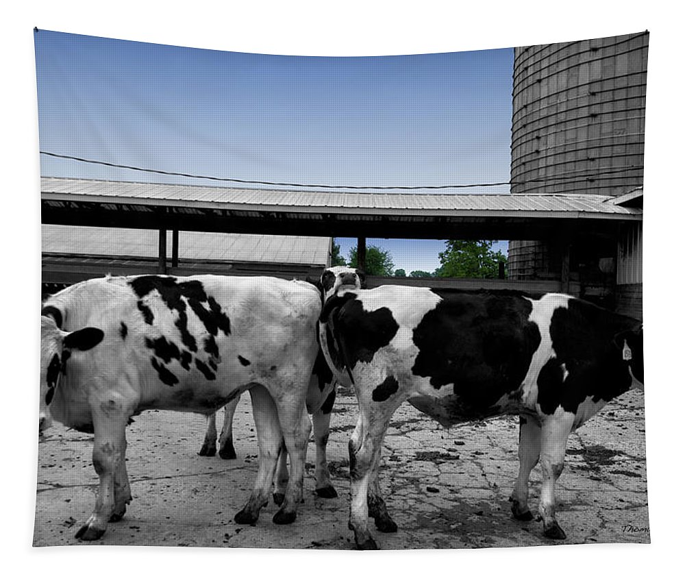 Animal Tapestry featuring the photograph Cows Peek A Boo by Thomas Woolworth