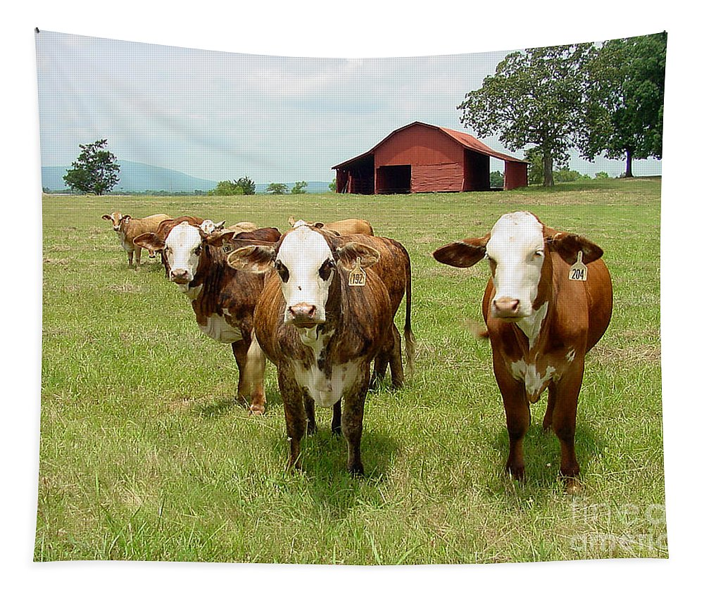Cow Tapestry featuring the photograph Cows8931 by Gary Gingrich Galleries
