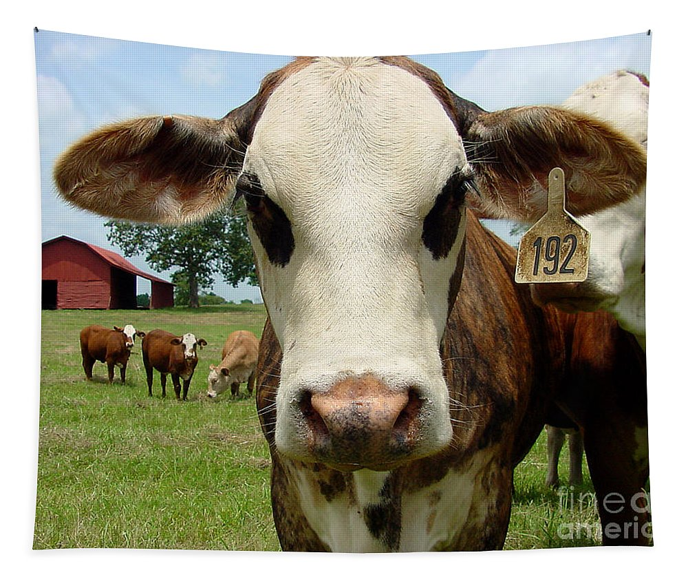 Cow Tapestry featuring the photograph Cows8957 by Gary Gingrich Galleries