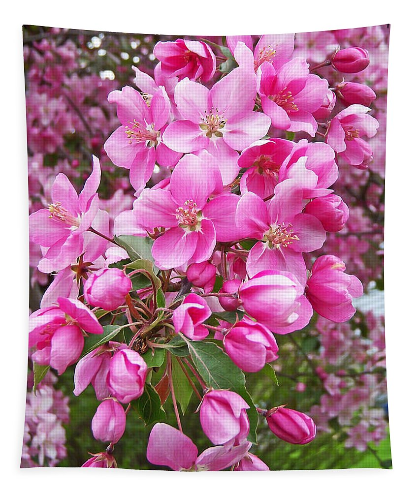 Tree Tapestry featuring the photograph Crab Apple Blossoms by Aimee L Maher ALM GALLERY