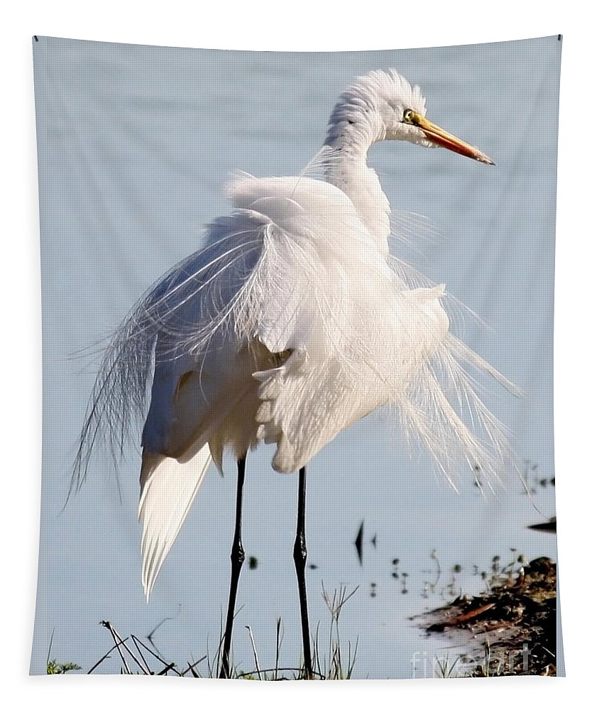 Feathers Tapestry featuring the photograph Crazy Egret Feathers by Carol Groenen