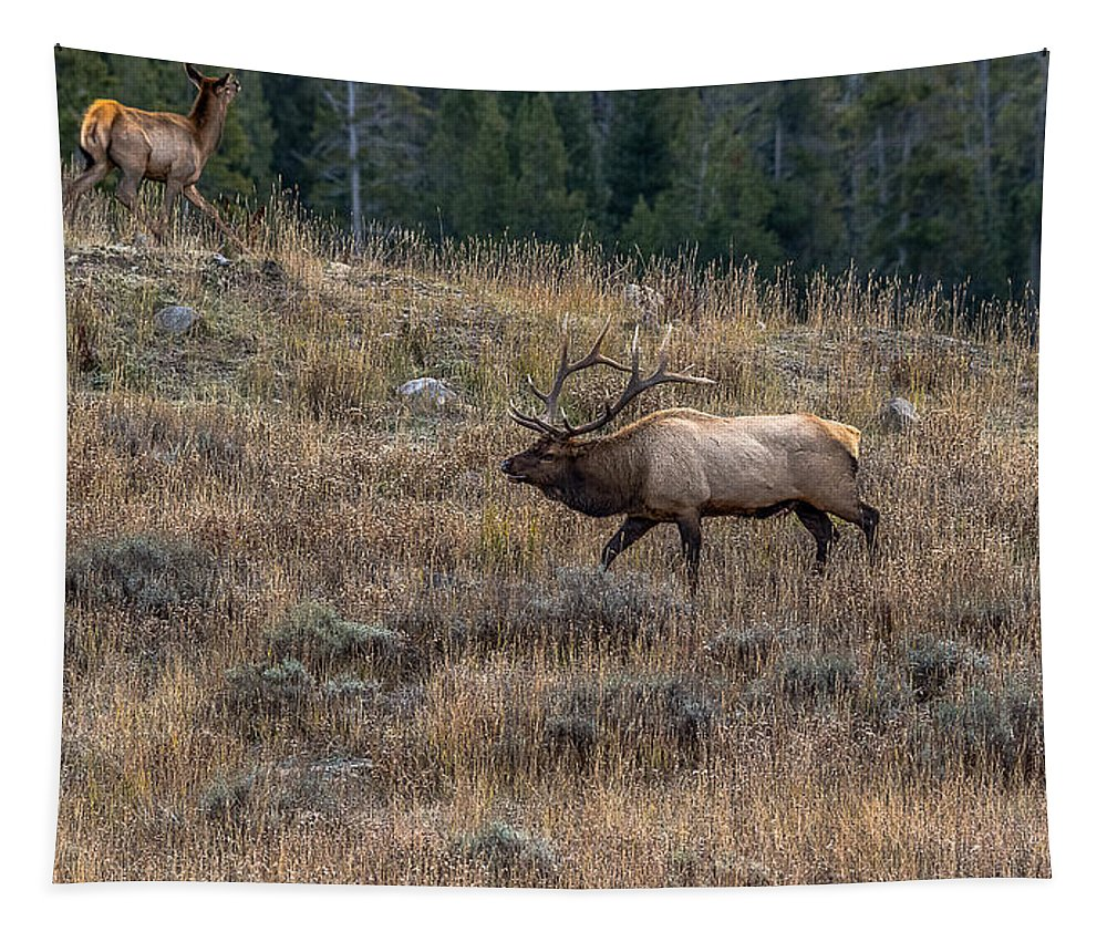 Bull Elk Tapestry featuring the photograph Crazy In Love by Yeates Photography