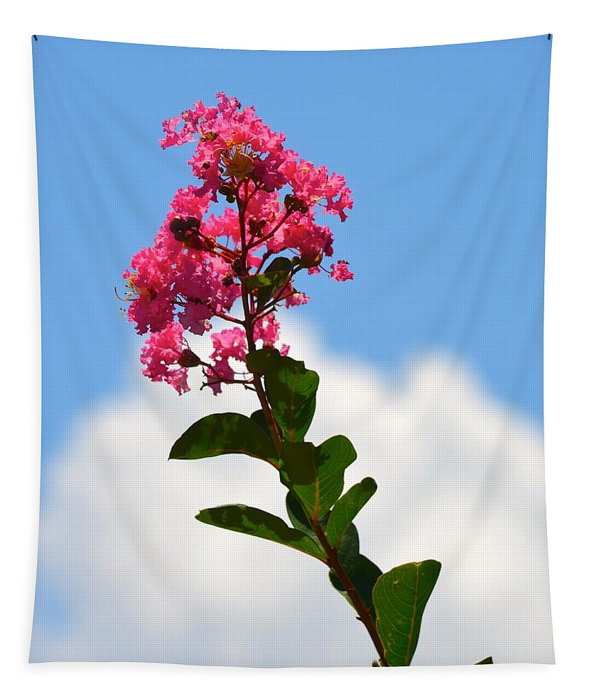 Crepe Myrtle Tapestry featuring the photograph Crepe Myrtle Against The Sky by Richard Bryce and Family