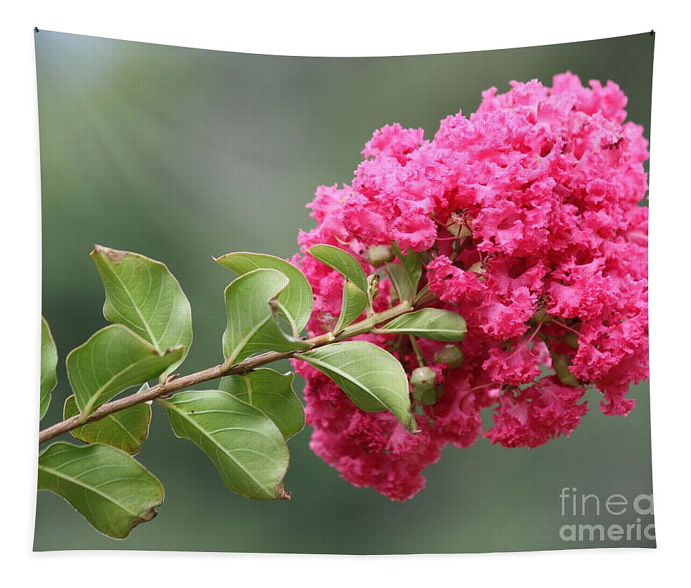 Lagerstroemia Tapestry featuring the photograph Crepe Myrtle Branch by Carol Groenen