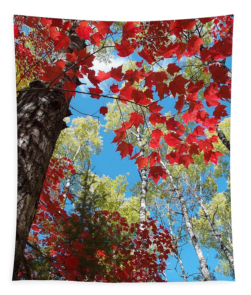 Peterson Nature Christina Bracha Foliage Voyager Voyagers Voyager's National Park Park Tapestry featuring the photograph Crimson Foliage by James Peterson