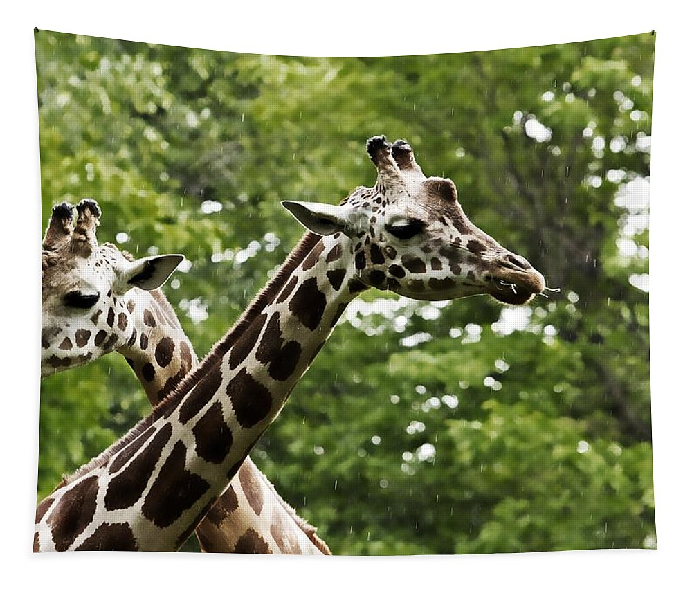 Giraffe Tapestry featuring the photograph Crisscrossed Giraffes by Alice Gipson