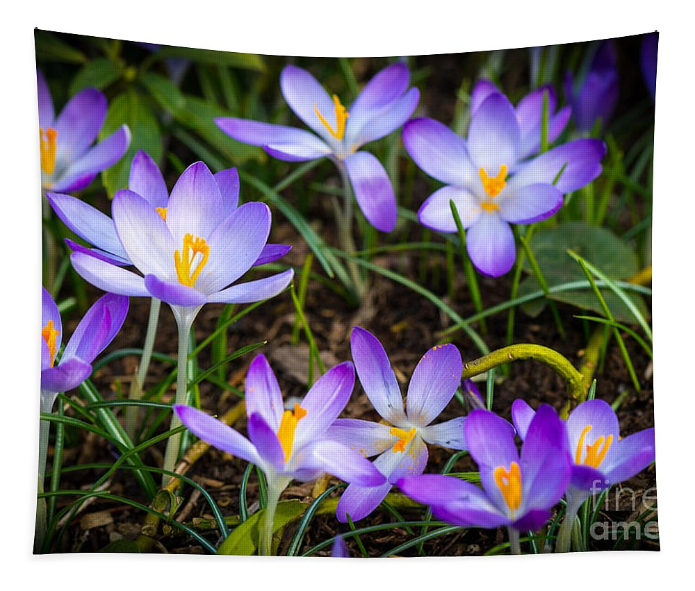 London Tapestry featuring the photograph Crocuses by Matt Malloy