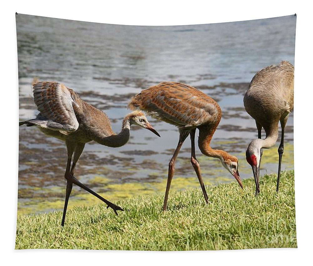 Sandhill Crane Tapestry featuring the photograph Curiosity by Carol Groenen
