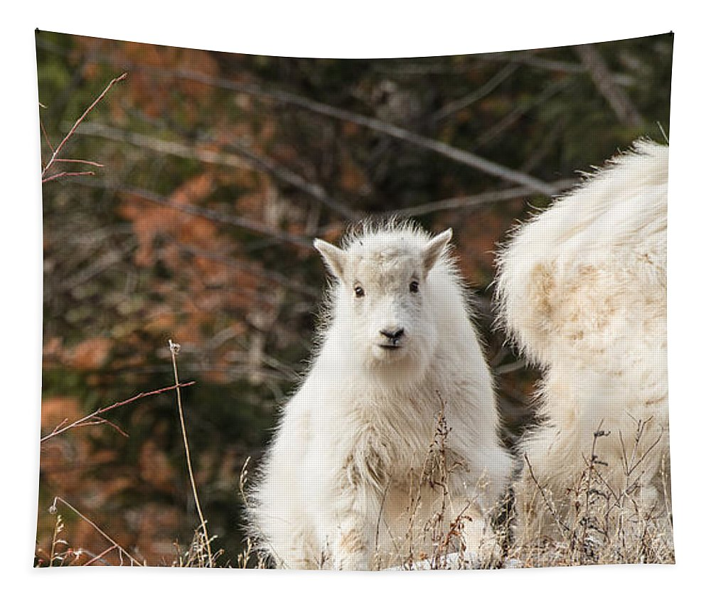 Rocky Mountain Goats Tapestry featuring the photograph Curious Delight by Yeates Photography
