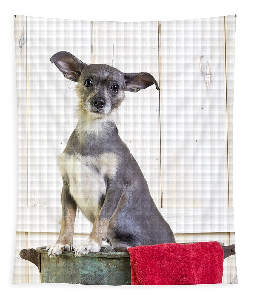 Dog Tapestry featuring the photograph Cute Dog Washtub by Edward Fielding