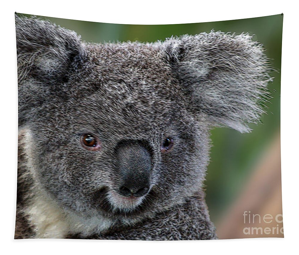 Koala Tapestry featuring the photograph Cute Look by Ben Yassa