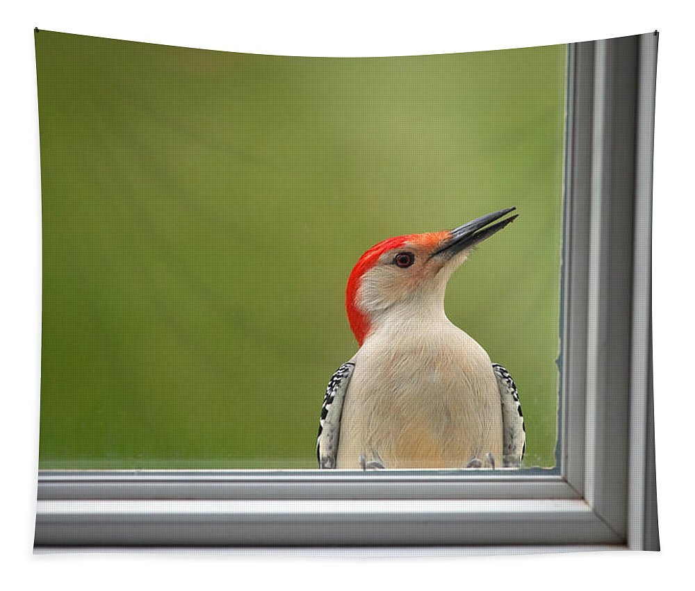 Woodpecker Tapestry featuring the photograph Cw My Crazy Woodpecker by Karol Livote