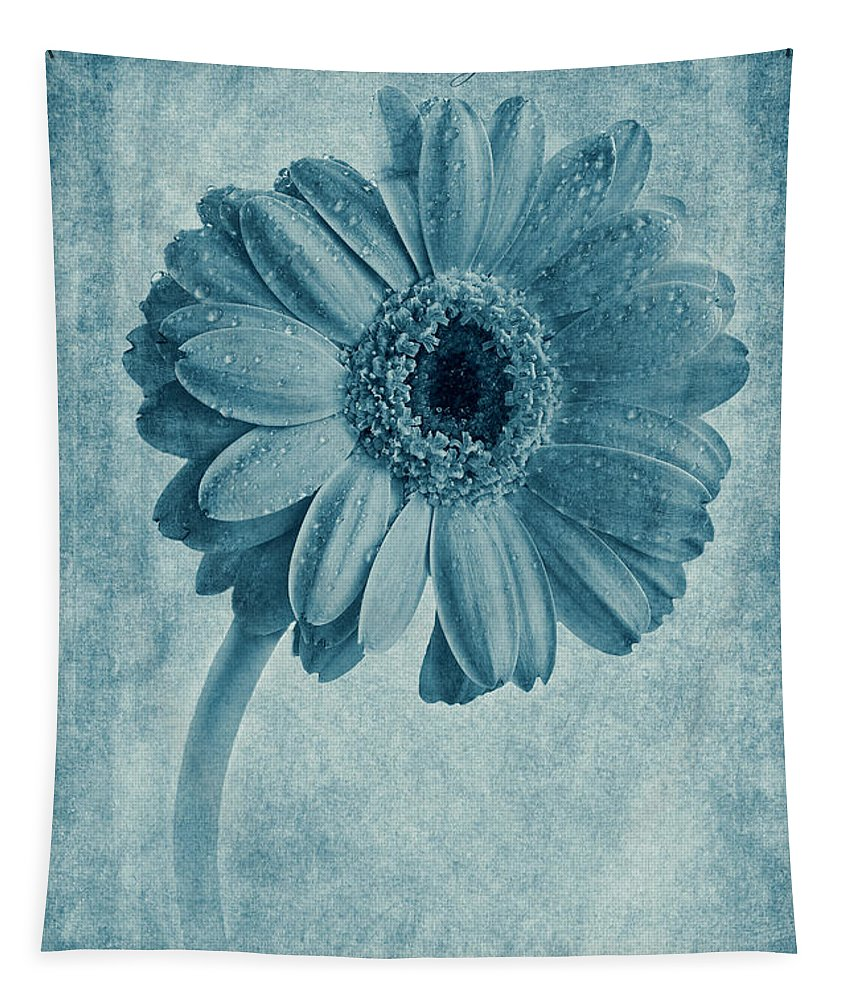 Cyanotype Gerbera Tapestry featuring the photograph Cyanotype Gerbera Hybrida With Textures by John Edwards