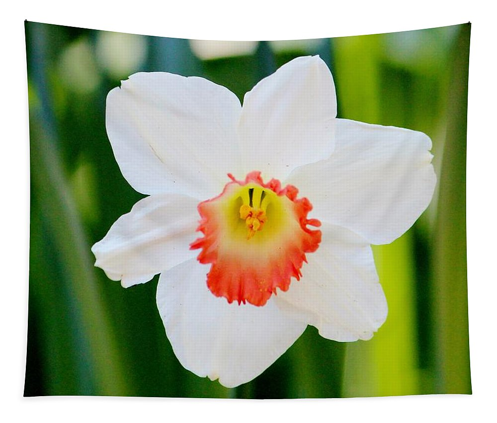 Daffodil Tapestry featuring the photograph Daffodil by Cynthia Guinn