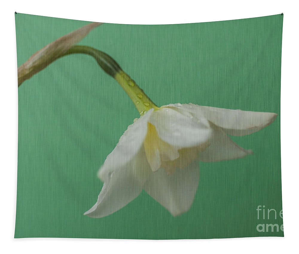 Daffodil Tapestry featuring the photograph Daffodilon Green 2 by Steve Purnell