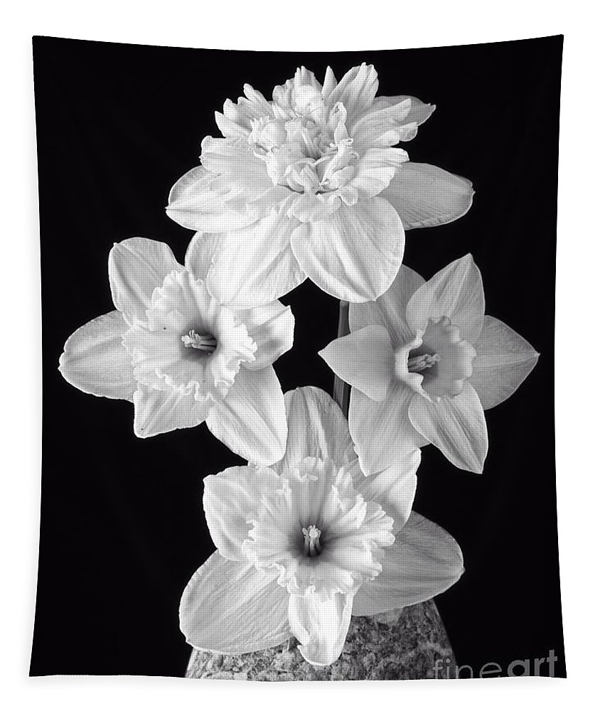 Fresh Tapestry featuring the photograph Daffodils by Edward Fielding