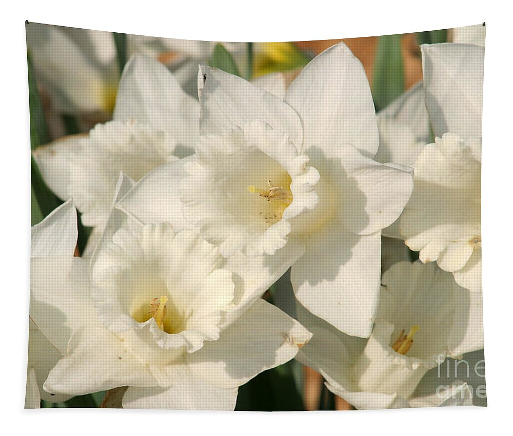 Dafodil Tapestry featuring the photograph Dafodils162 by Gary Gingrich Galleries