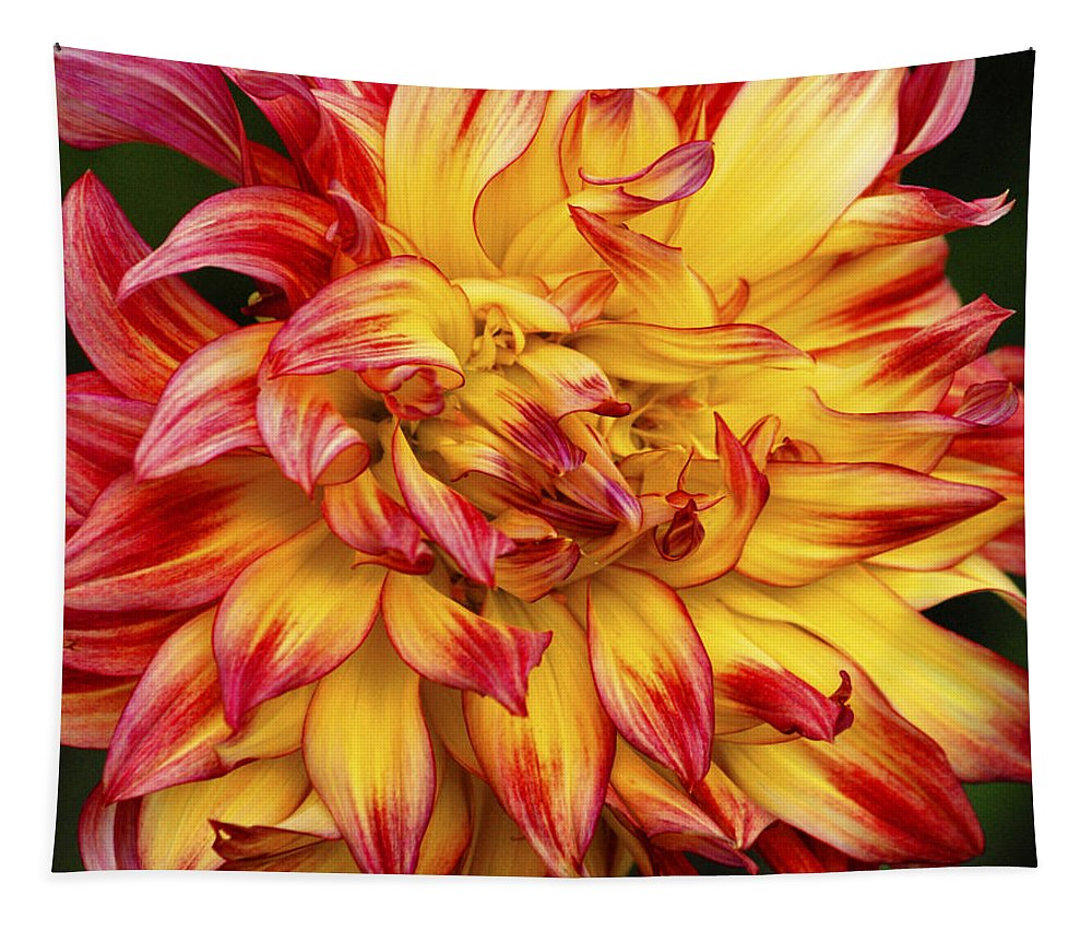 Dahlia Tapestry featuring the photograph Dahlia - 757 by Paul W Faust - Impressions of Light