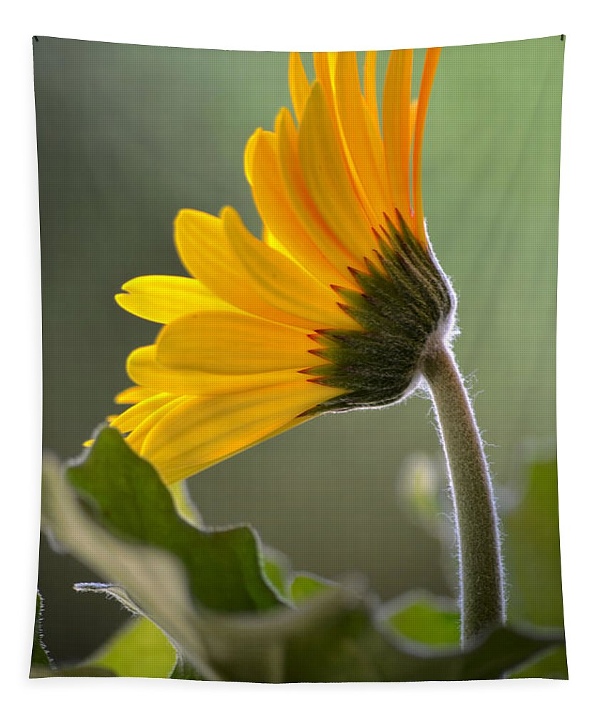 Deb Halloran Tapestry featuring the photograph Daisy Derriere by Deb Halloran
