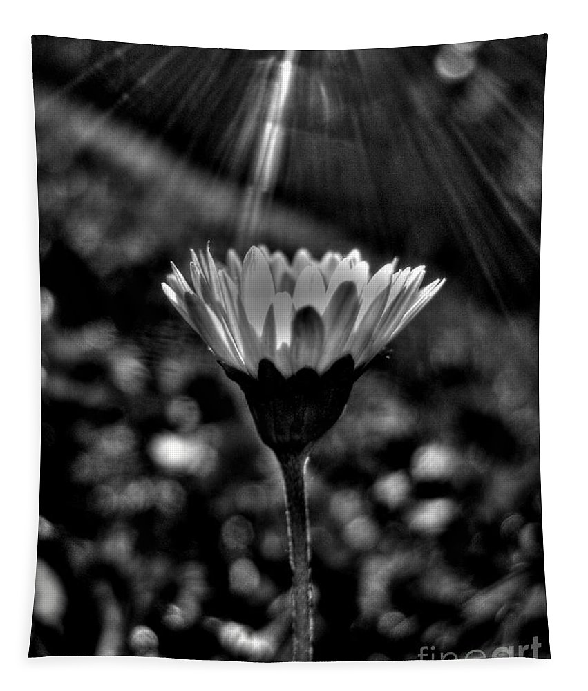 Daisy Tapestry featuring the photograph Monochrome Daisy Under Sun by Nina Ficur Feenan