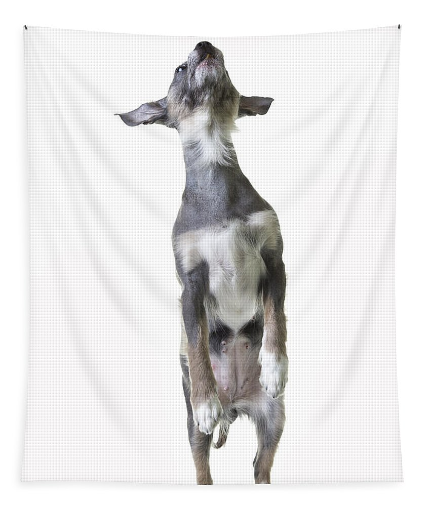 Dog Tapestry featuring the photograph Dancing Dog by Edward Fielding