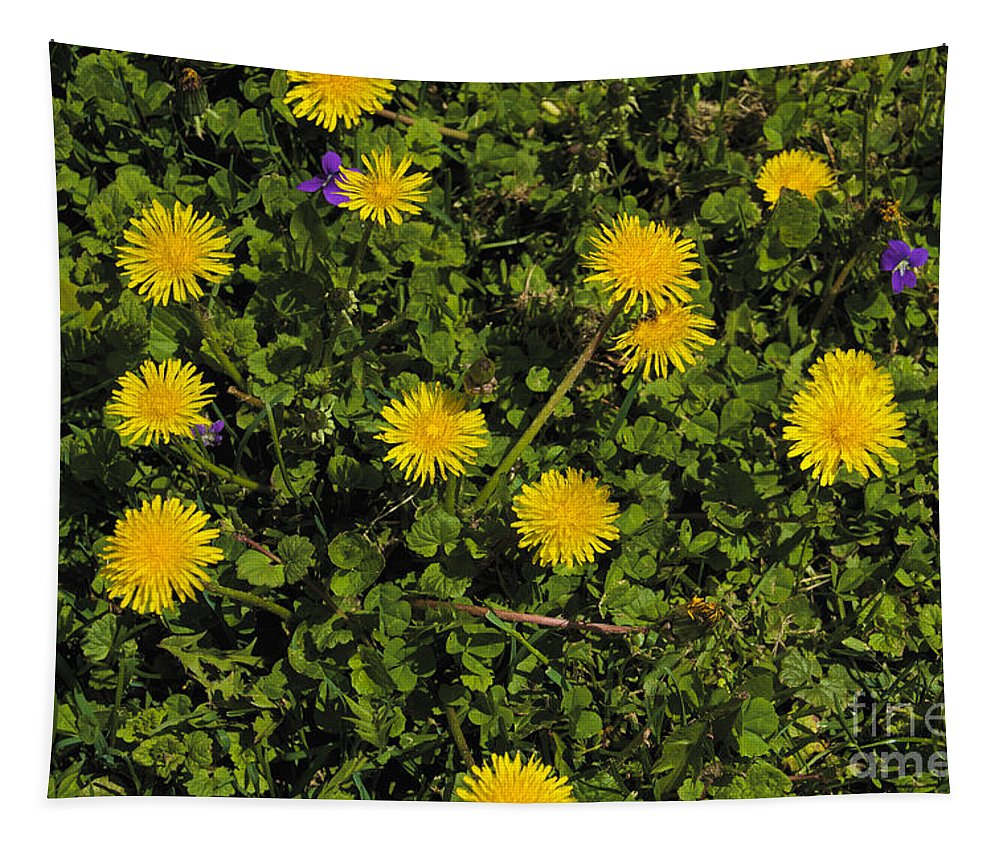 Spring Tapestry featuring the photograph Dandelion Convention by William Norton