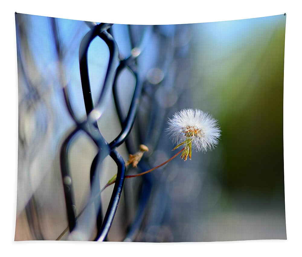 Laura Fasulo Tapestry featuring the photograph Dandelion Wish by Laura Fasulo
