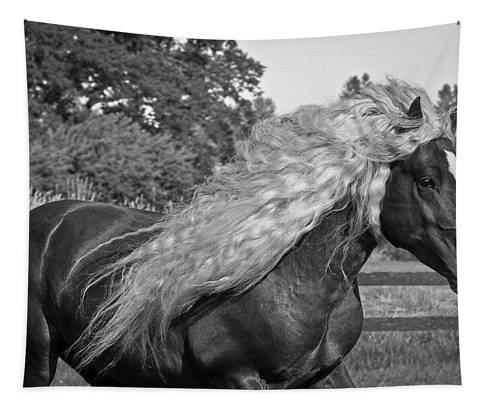 Dante In Black And White Tapestry featuring the photograph Dante In Black And White by Wes and Dotty Weber