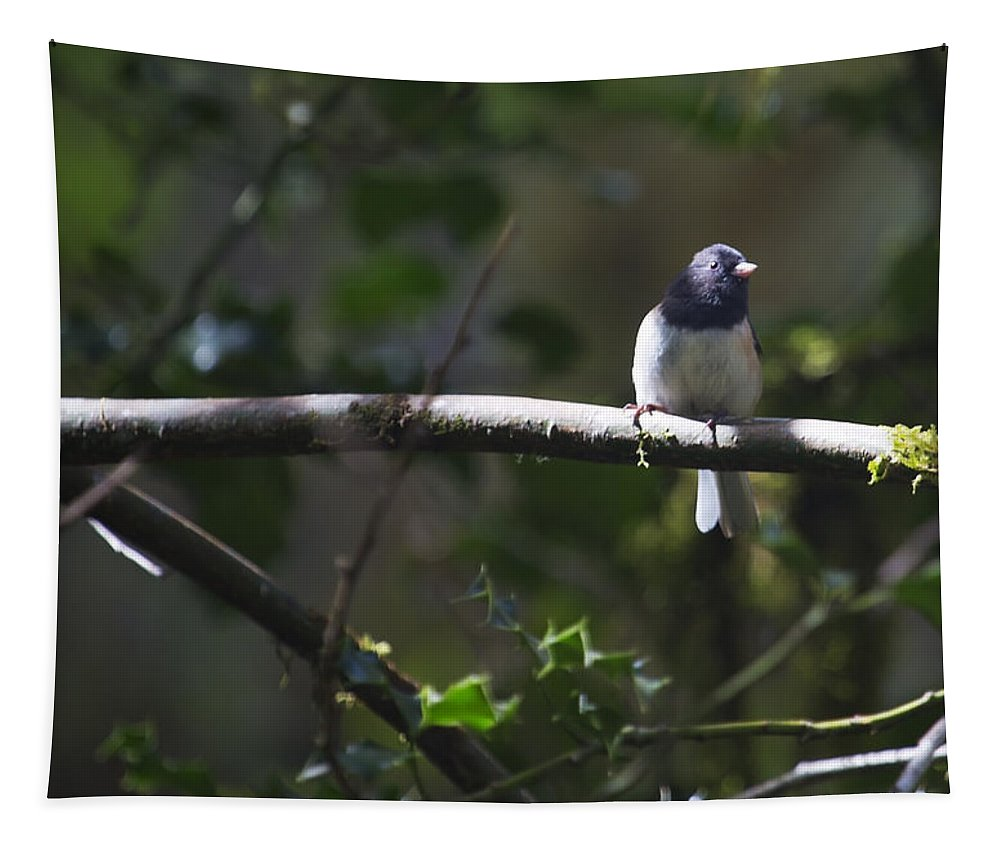 Bird Tapestry featuring the photograph Dark Eyed Junco by Belinda Greb
