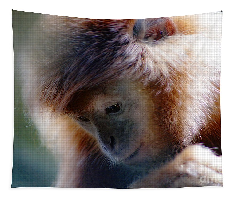 Animal Tapestry featuring the photograph Day Dream Monkey by Ben Yassa