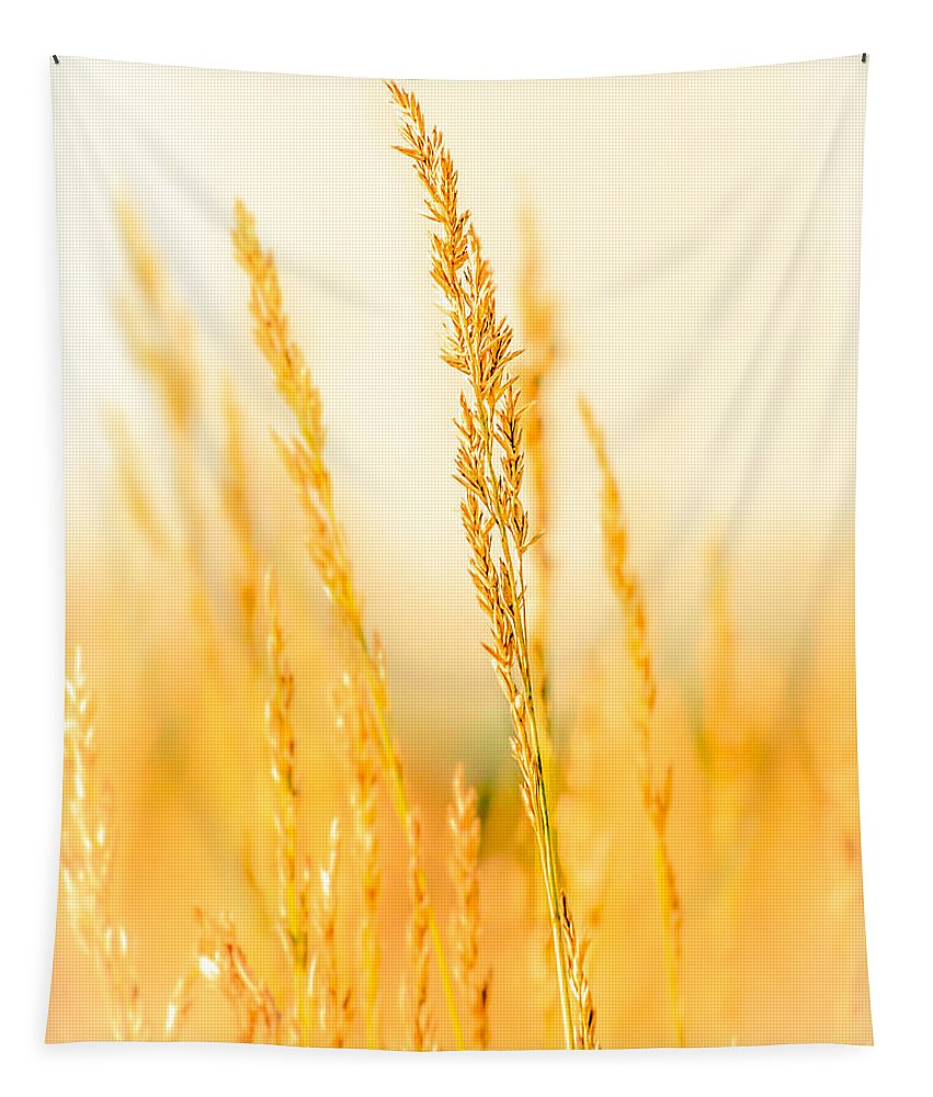 Grass Tapestry featuring the photograph Daydream by Bob Orsillo