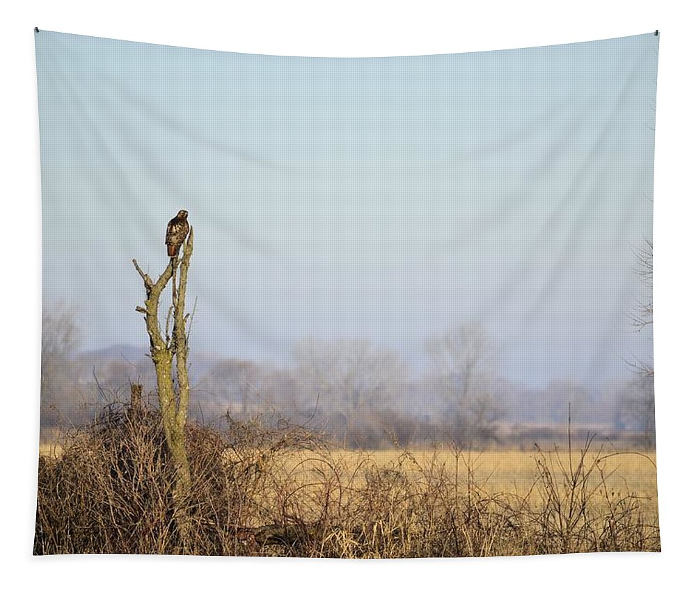 Hawk Tapestry featuring the photograph Deadwood Hunter by Bonfire Photography