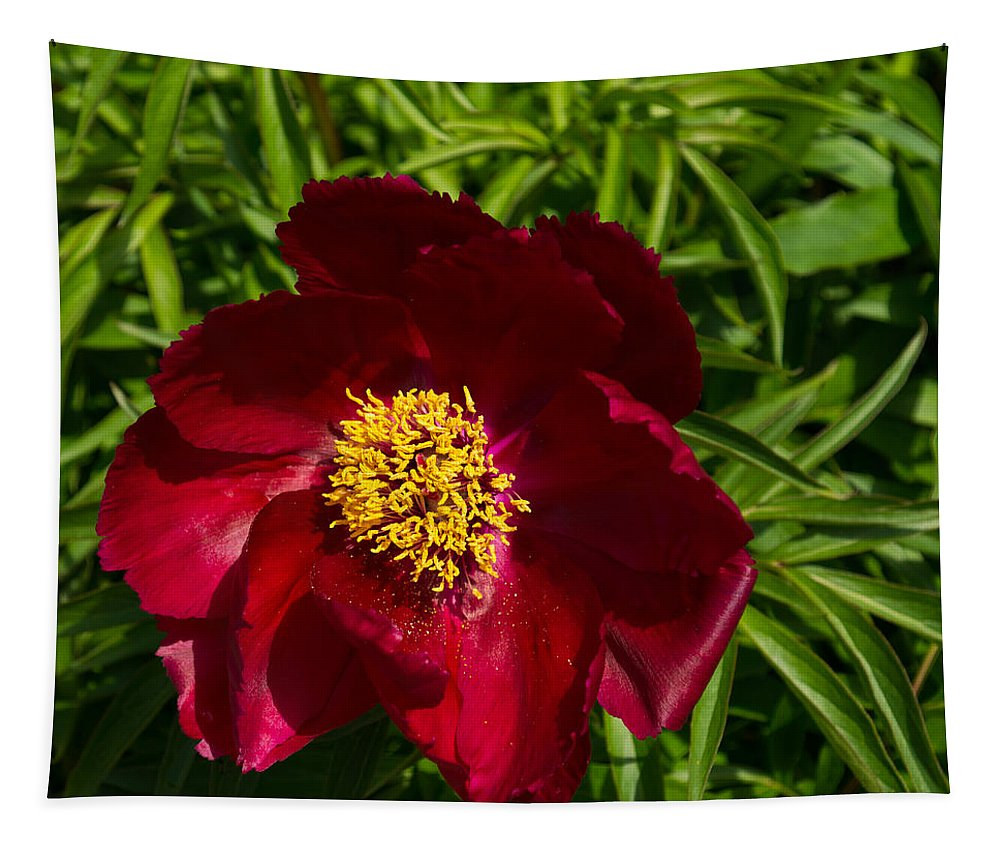 Peony Tapestry featuring the photograph Deep Red Peony With Bright Yellow Stamens by Georgia Mizuleva