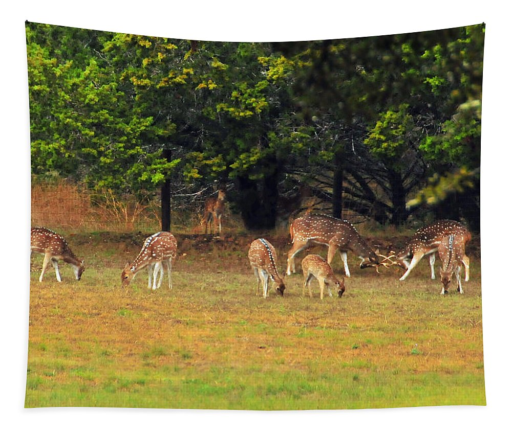 Deer Tapestry featuring the photograph Deer At Play by Lynn Bauer