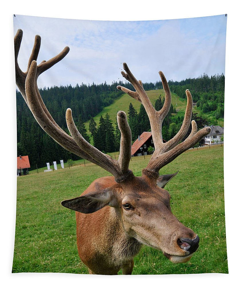 Deer Tapestry featuring the photograph Deer Cervidae With Impressive Antlers by Matthias Hauser