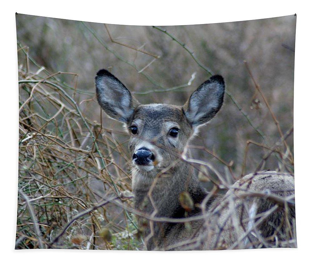 Karen Silvestri Tapestry featuring the photograph Deer by Karen Silvestri