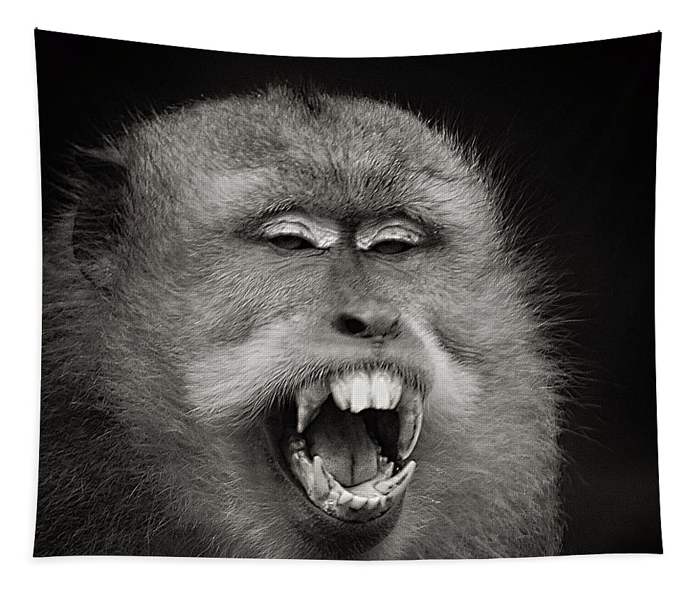 Monkey Tapestry featuring the photograph Dentist Time by Ben Yassa