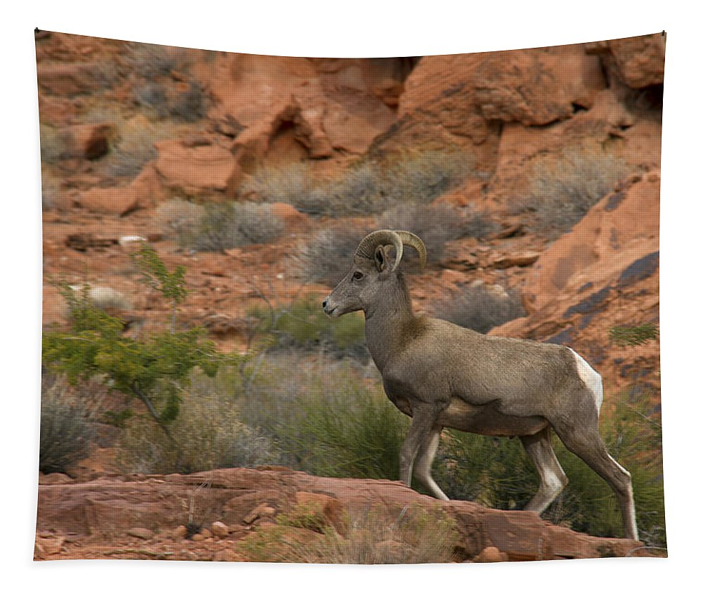 Desert Bighorn Sheep Tapestry featuring the photograph Desert Bighorn Sheep by Debby Richards
